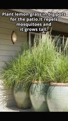 15 + verlockende Hinterhof-Garten-Entwurfs-Vogel-Bad-Ideen Alternatives to Grass for your Backyard For a lot of, conserving Rustic Backyard, Backyard Garden Design, Lawn And Garden, Backyard Landscaping, Garden Pots, Backyard Privacy, Landscaping Ideas, Bird Bath Garden, Backyard Ideas