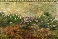 Textured Flowers....  http://rick-buzalewski.artistwebsites.com