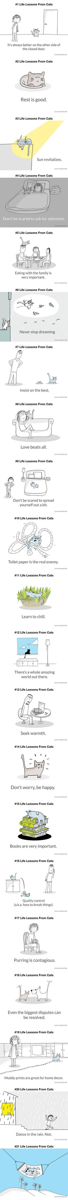 21 Life Lessons From Cats (By Last Lemon)