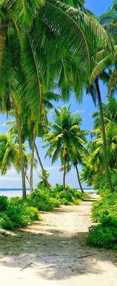 Dorado beach - Puerto Rico