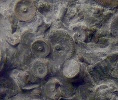 Machine dated at 400 million years found in Russia – Strange Unexplained Mysteries
