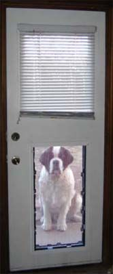 Behemoth Maxseal For St Bernard Dog Doors Pinterest Dogs And