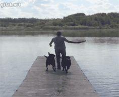 ¿Pensabas que esos perros iban a caer? ¡JA!