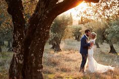 romance in the olives after wedding in Tuscany