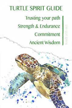 Turtle spirit animal guide for longevity, trusting out path, deep ancient wisdom and courage Turtle Spirit Animal, Spirit Animal Totem, Animal Spirit Guides, Your Spirit Animal, Animal Totems, Turtle Symbolism, Animal Symbolism, Turtle Meaning, Turtle Quotes