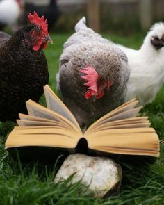 Ha! The literary chickens. Makes me :)