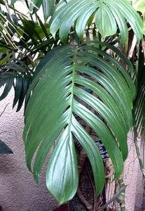 rare tropical plants