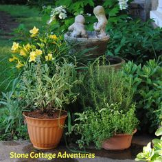 Herb gardening!