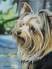Yorkshire Terrier Paintings - Yorkie by Caren Bestbier