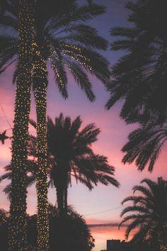 palmeras al oscurecer