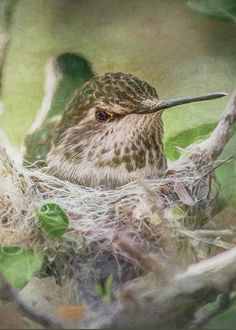 Minding the Nest by Teresa Wilson