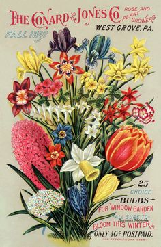 Items similar to Conrad and Jones 05 1897 The Rose Growers West Grove, PA Seed Company Bright Colorful Print Vintage Reproduction Print 11 on Etsy Vintage Diy, Images Vintage, Vintage Cards, Vintage Postcards, Vintage Labels, Vintage Designs, Garden Catalogs, Seed Catalogs, Plant Catalogs