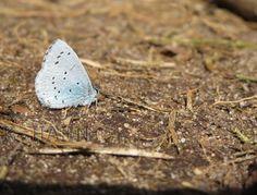 Schmetterling, Nahaufnahme mit Canon Ixus.