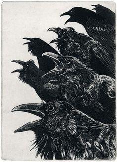 Raven etching