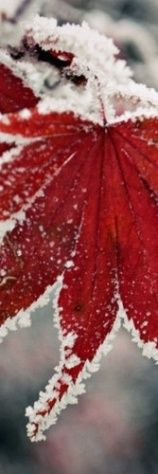 Frozen leave , from Iryna