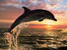 Dolphins and Humans - Watch video here: http://dailyanimalsvideos.com/2012/04/14/dolphins-and-humans/