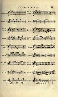 Bird Songs in sheet music :) very cool!
