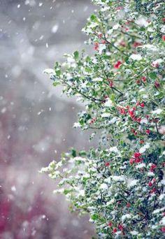 Specialty Christmas Tree Ornaments