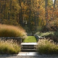 Feathery autumn landscape with fountain grass (P. alopecuroides 'Hamlin' in foreground). By Stephen Stimson Landscape Archs.  Charles Mayer.