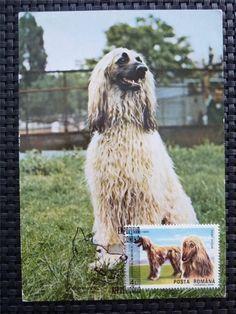 ROMANIA MK HUND AFGAN DOG DOGS MAXIMUMKARTE CARTE MAXIMUM CARD MC CM c4790