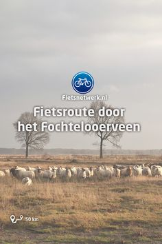 Netherlands, Holland, Travel Tips, Hiking, Camping, Bike, Poster, Countries, Rice