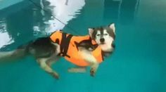 Camera shutter speed synchronised to a dog swimming.