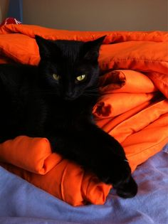 The beauty of color. Black goes with anything. Black cats rule.