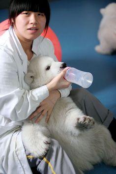 China Polar Bear Twins