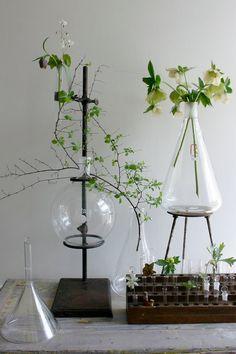 how does your garden grow?: via ethanollie