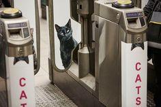 Metrô de Londres foi dominado por gatos - Assuntos Criativos