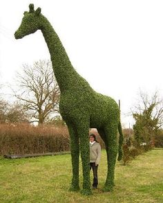 Just a boxwood giraffe topiary...