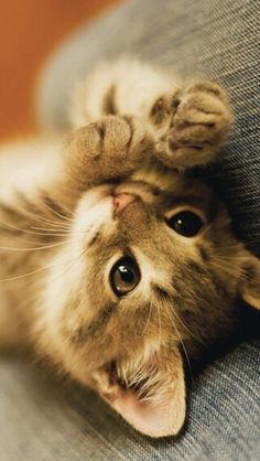 Cool Cat Tree Plans - Cat Trees, Furniture & Toys For Happy .-Cool Cat Tree Plans – Cat Trees, Furniture & Toys For Happy Healthy Cats! Cats Rule… Please Adopt - Cute Cats And Kittens, I Love Cats, Crazy Cats, Cool Cats, Kittens Cutest, Animals And Pets, Baby Animals, Funny Animals, Cute Animals