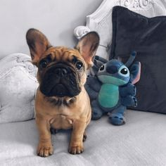 Esther the French Bulldog and Stitch ❤️ #buldog