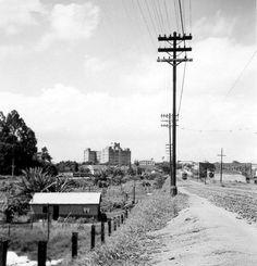 1960 - Avenida Ibirapuera, com o prédio do Instituto Biológico no horizonte.