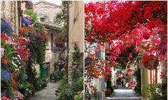 16прекрасных улиц, расцветающих сприходом весны