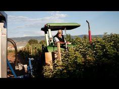 ▶ The Amazing Raspberry Harvester - YouTube
