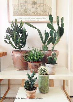 kaktusser Foto og styling Dorthe Kvist Meltdesignstudio 25