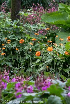 Gardendesign | Tuinontwerp | Geum 'Dolly North' Planting - Design by John Schoolmeesters
