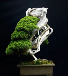 Breathtaking bonsai trees in interesting growth shapes