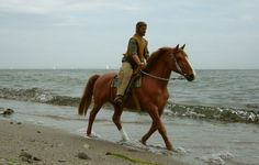 breyer horse realistic scenes | beach