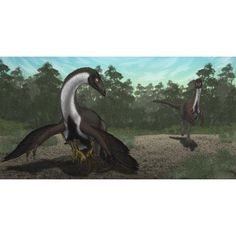 Ornithomimus mother dinosaur with juveniles adult male in background Canvas Art - Vitor SilvaStocktrek images (20 x 11)