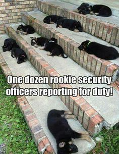 Rookies! They're everywhere!