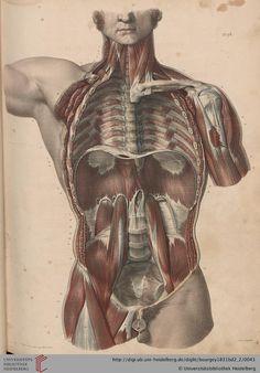 3d Anatomy, Human Anatomy Art, Anatomy Poses, Medical Anatomy, Anatomy Study, Anatomy Drawing, Body Drawing, Anatomy Reference, Pic Of Human Body