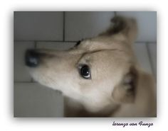 .2013. Art Photography, Dogs, Pictures, Animals, Photos, Fine Art Photography, Animales, Animaux, Pet Dogs