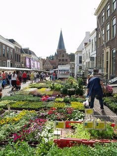 Zutphen markt op zaterdag met bloemen Theo Dutch People, Water Tower, Netherlands, Holland, Street View, Europe, Min, Nature, Travel