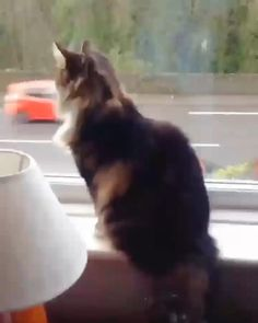 Funny Cute Cats, Cute Cats And Kittens, Cute Funny Animals, Cute Baby Animals, Kittens Cutest, Animals And Pets, Kitty Cats, Cute Animal Videos, Funny Animal Pictures
