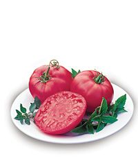 neat info about growing tomatoes