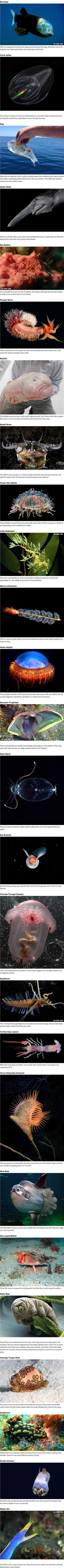 26 Mysterious Sea Creatures That Look Like They Belong In a Sci-Fi Movie