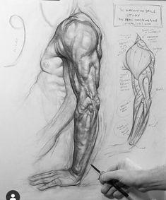 Arm Drawing, Figure Drawing, Drawing Ideas, Sketchbook Inspiration, Art Sketchbook, Academic Art, Drawing Studies, Painting Quotes, Male Figure