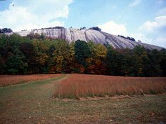Stone Mountain State Park, NC. Great place to camp and hike, lots of deer.